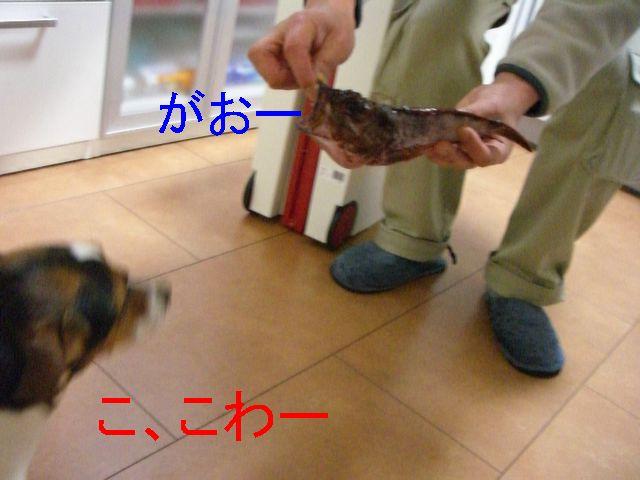 f0053952_203283.jpg