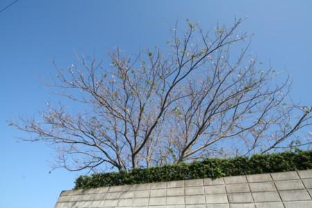 """え?春?…季節を間違えた""""桜""""_d0082356_10583781.jpg"""