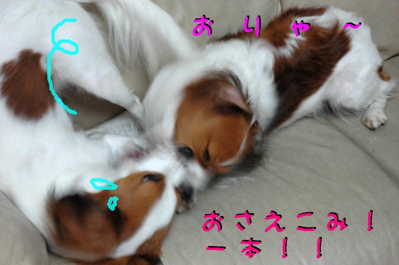 c0075585_394012.jpg