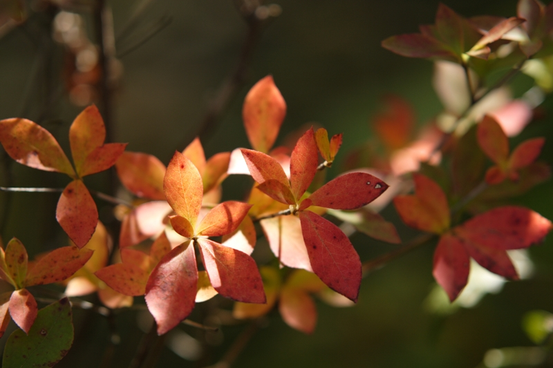 ちょっぴり秋の色_f0091207_23471233.jpg