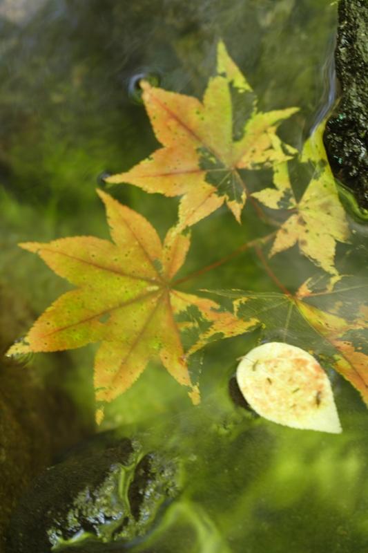 ちょっぴり秋の色_f0091207_23474751.jpg