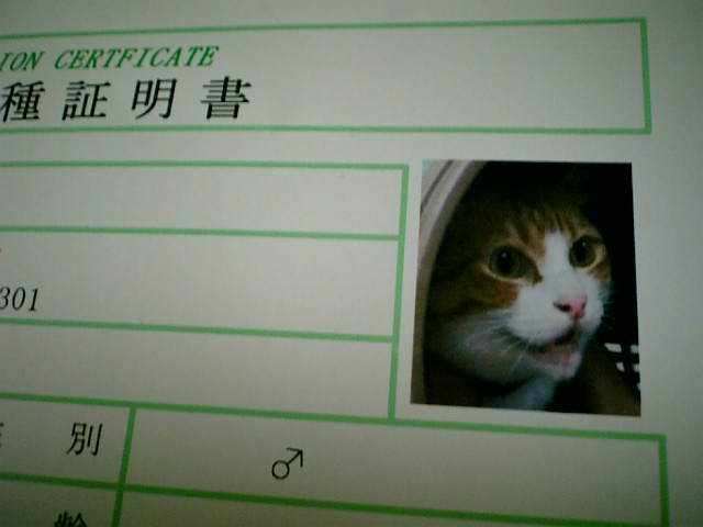 猛猫のつくりかた_b0019333_12325754.jpg