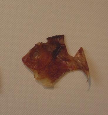 10月13日(土) 「金目鯛の金目鯛」み~っけ♪_d0082944_2105564.jpg