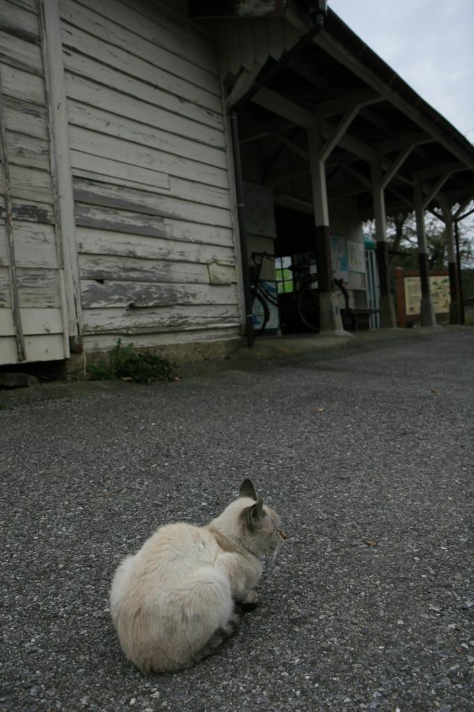 猫の駅長さん_c0098347_20545465.jpg