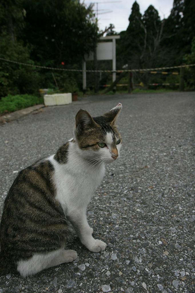 猫の駅長さん_c0098347_205588.jpg