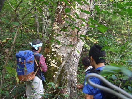 大山、キノコ狩りツアー  参加7名_d0007657_16463981.jpg