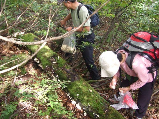 大山、キノコ狩りツアー  参加7名_d0007657_16471316.jpg