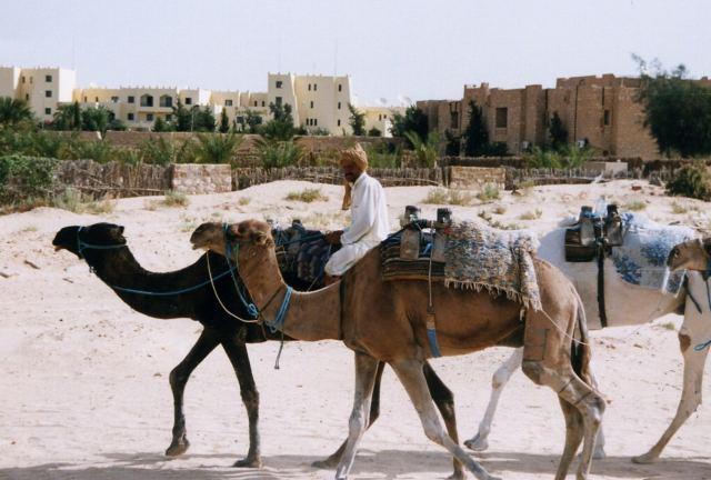 ラクダの画像 p1_6