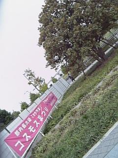 Image537.jpg