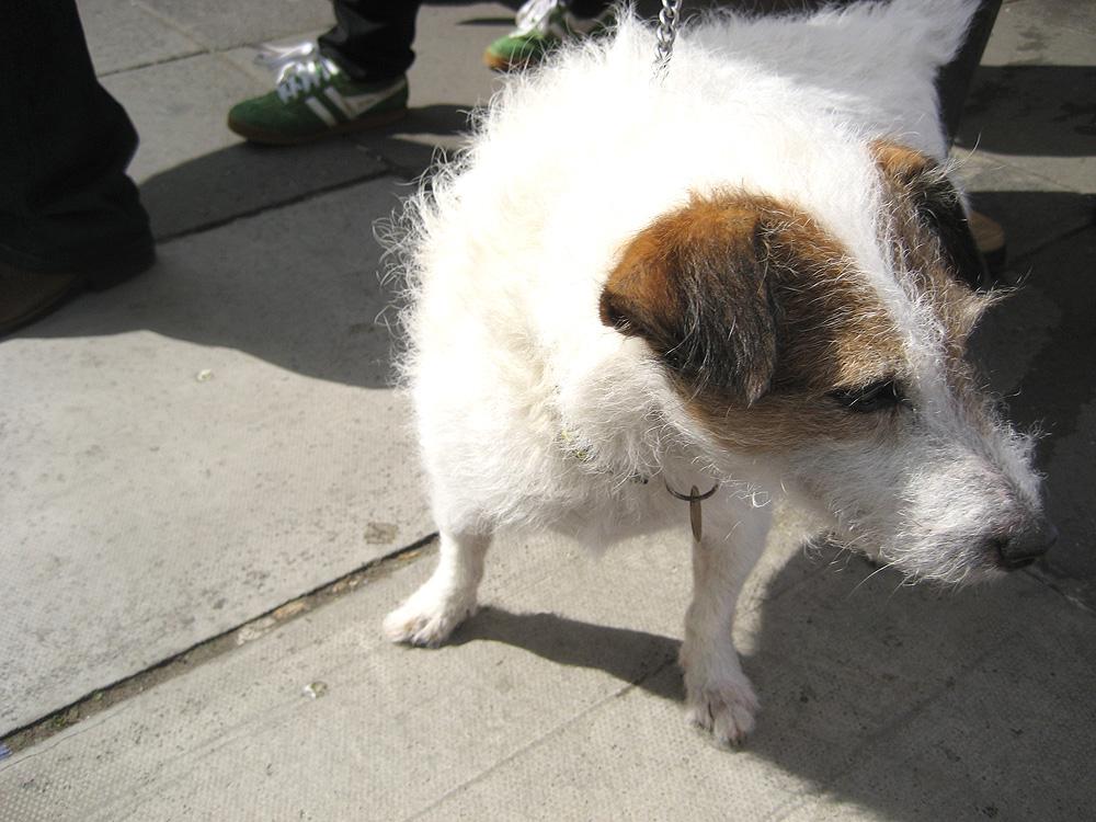 pandaとイギリスの犬_b0091545_0265328.jpg