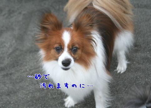 d0013149_21485441.jpg