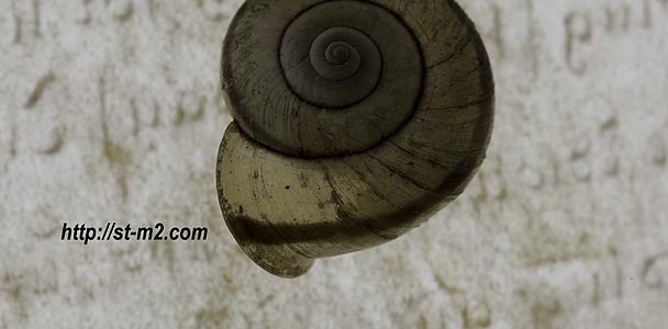 カタツムリ 「螺旋の構造」_a0002672_235592.jpg