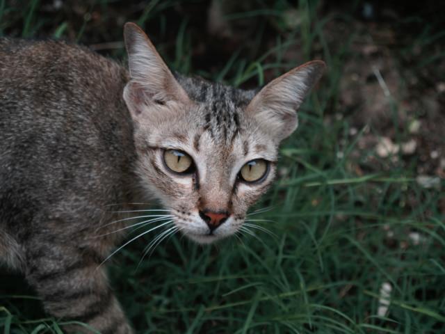 タイの風景 ライレイ・ビーチの野良猫ちゃん_f0024992_17561659.jpg