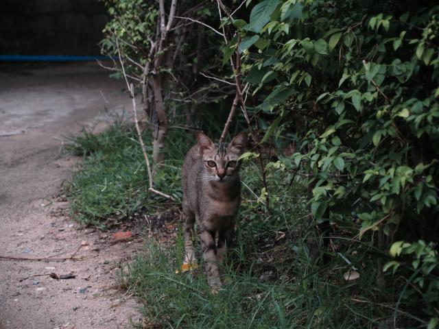 タイの風景 ライレイ・ビーチの野良猫ちゃん_f0024992_2245850.jpg