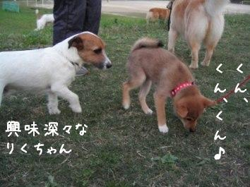 散歩デビュー_f0068501_10155486.jpg
