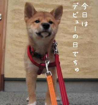 散歩デビュー_f0068501_1094415.jpg