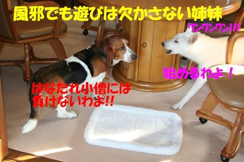 f0121712_90977.jpg