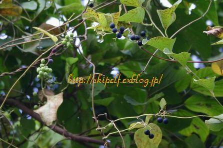 秋の日は・・_c0134734_23532690.jpg