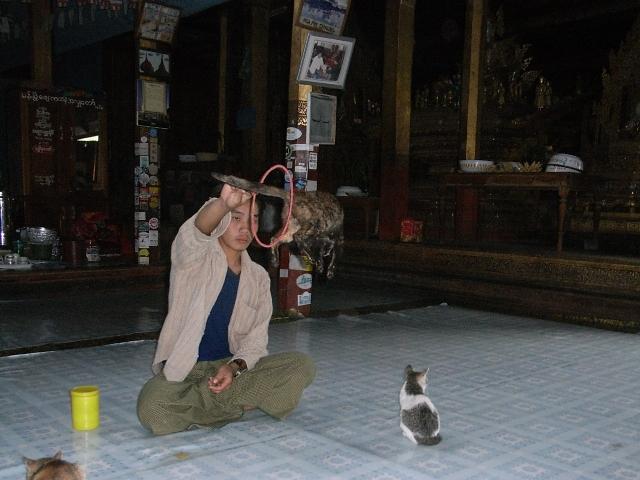 <インレー湖> ガーペー僧院のジャンピング・キャット_c0011649_6553128.jpg