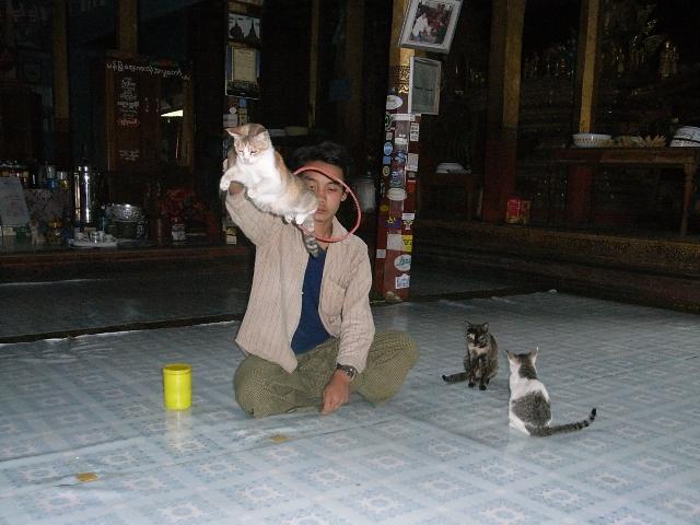 <インレー湖> ガーペー僧院のジャンピング・キャット_c0011649_6574043.jpg