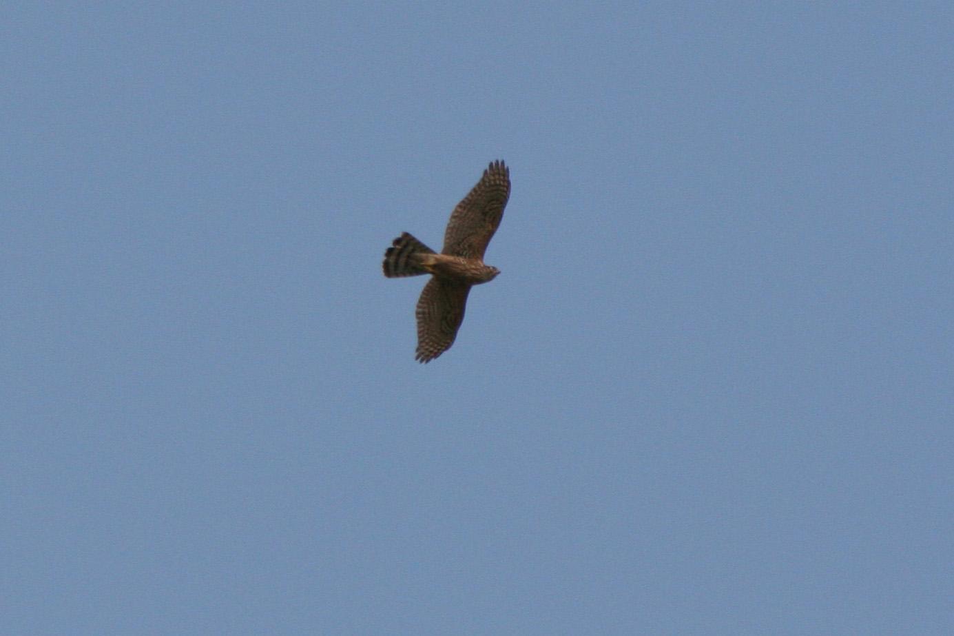 ★オシドリもやってきました! 先週末の鳥類園(2007.10.11,13~14)_e0046474_15315211.jpg