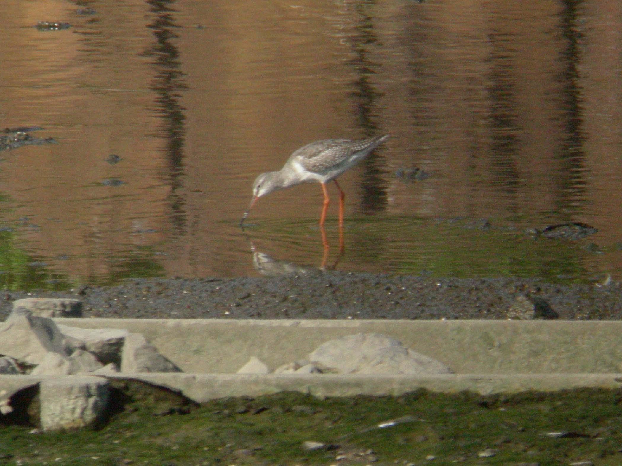 ★オシドリもやってきました! 先週末の鳥類園(2007.10.11,13~14)_e0046474_15342060.jpg