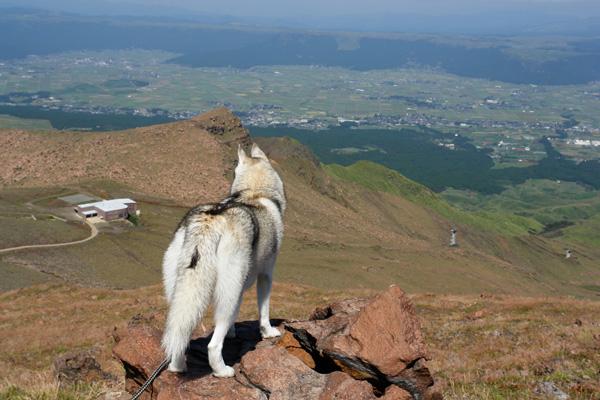 阿蘇中岳へ_c0049299_21254756.jpg