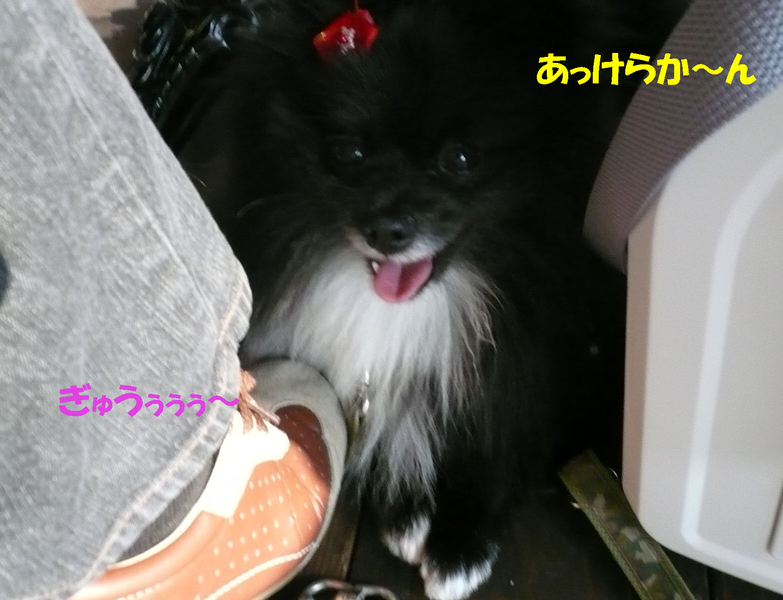 c0128896_2004330.jpg