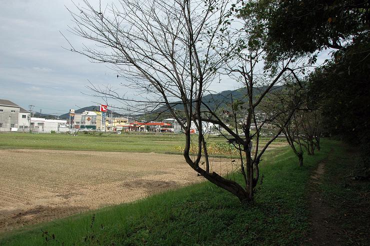 太宰府 水城跡_a0042310_21555824.jpg