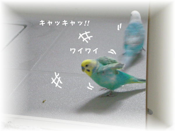 f0132055_8514037.jpg