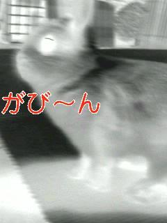 f0104057_213081.jpg
