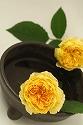 バラ イングリッシュローズ  黄色