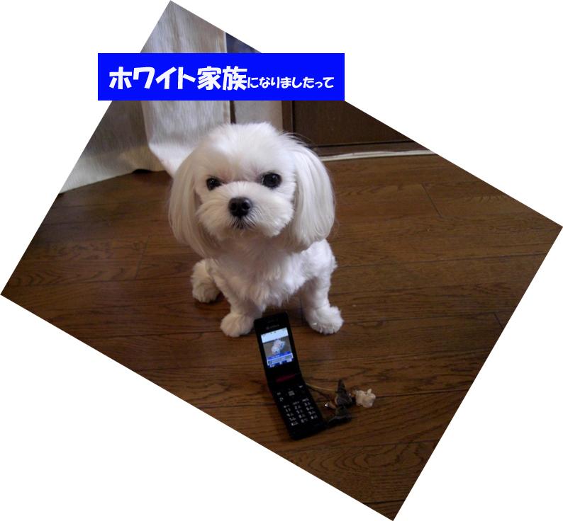 b0060071_23152390.jpg