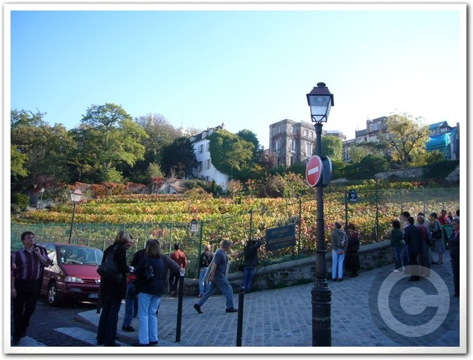 ■モンマルトルの葡萄畑(パリ)_a0014299_775975.jpg