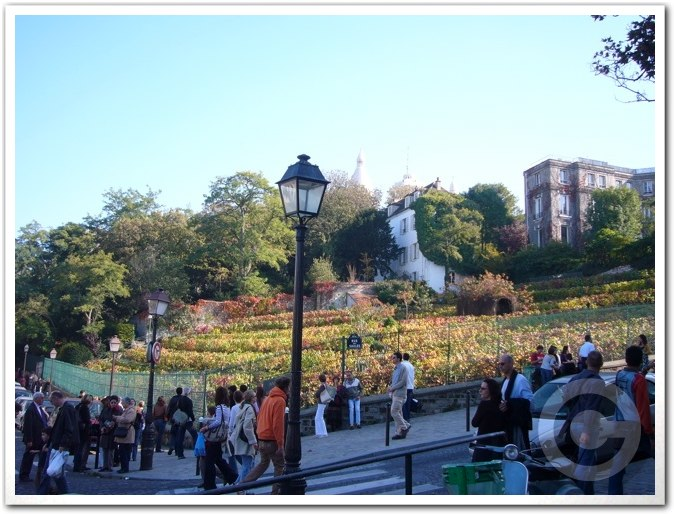 ■モンマルトルの葡萄畑(パリ)_a0014299_781658.jpg