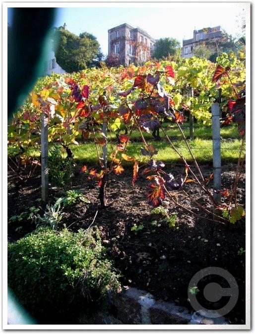 ■モンマルトルの葡萄畑(パリ)_a0014299_783244.jpg