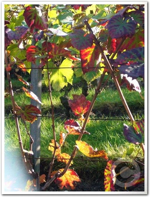 ■モンマルトルの葡萄畑(パリ)_a0014299_784948.jpg