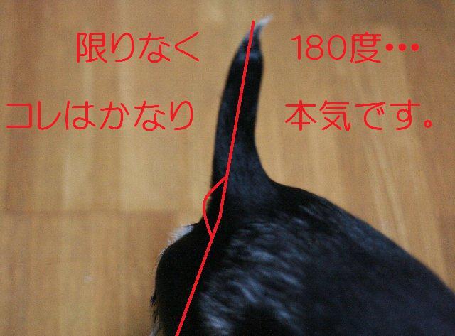 a0100721_2233770.jpg
