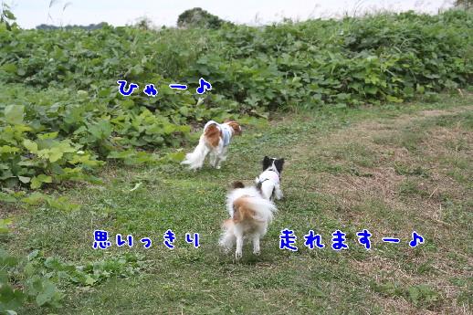 d0013149_0211248.jpg