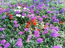 本社の庭_f0151251_11355330.jpg