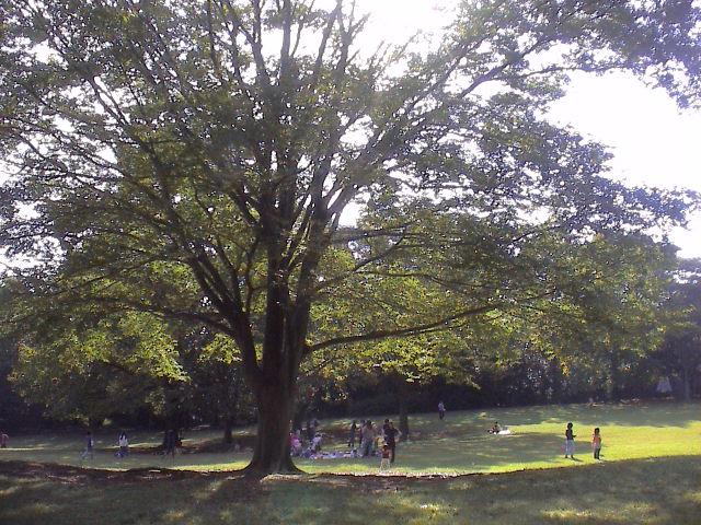 秋の空、秋の雲。_e0060555_1647873.jpg