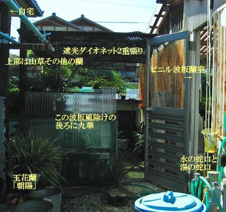 ◆中国蘭・九花作場                 No.131_d0103457_13191962.jpg