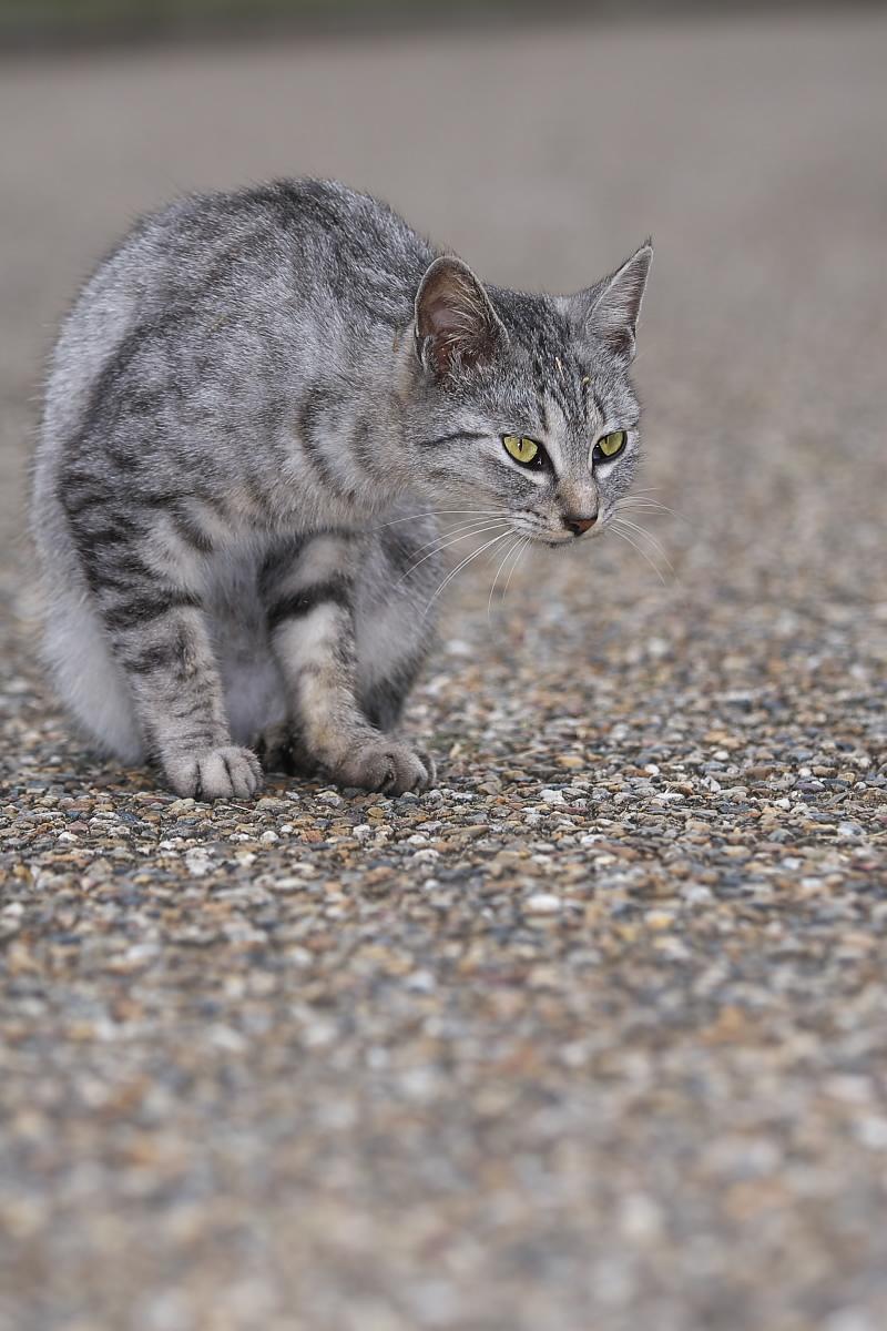 猫に遊んでもらいましたよー 2_f0021869_13384796.jpg