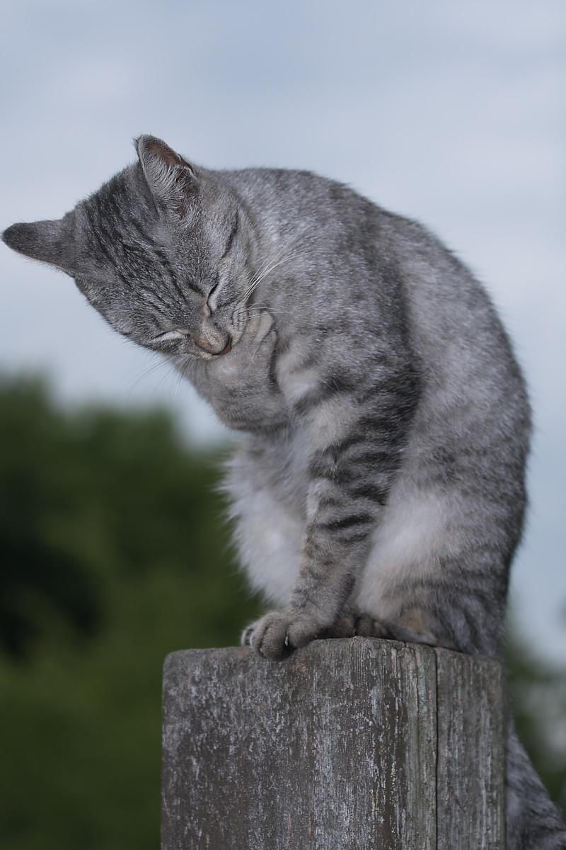 猫に遊んでもらいましたよー 2_f0021869_13391549.jpg