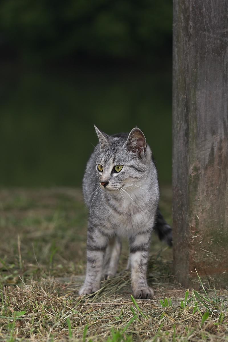 猫に遊んでもらいましたよー 2_f0021869_13394857.jpg