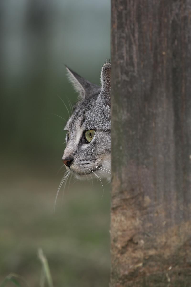猫に遊んでもらいましたよー 2_f0021869_13401792.jpg