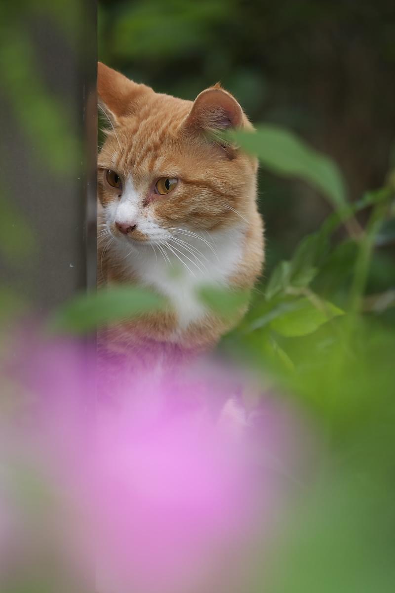 猫に遊んでもらいましたよー 2_f0021869_13411749.jpg