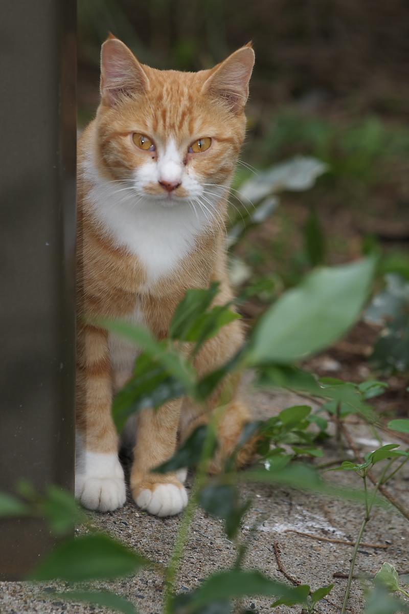 猫に遊んでもらいましたよー 2_f0021869_134132.jpg