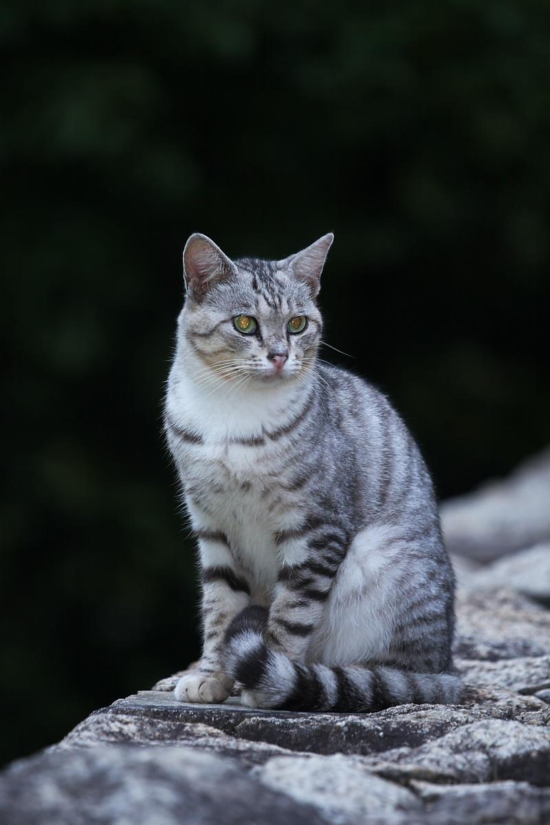 猫に遊んでもらいましたよー 2_f0021869_1342340.jpg