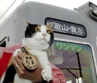 猫の駅長_c0052876_19582723.jpg